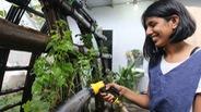Nhà rau bằng tre và cỏ tranh giữa Sài Gòn của cô gái Ấn