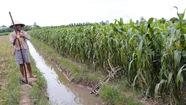 Làm nông giờ phải trông chừng hồ thủy điện của láng giềng
