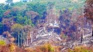 Kỷ luật hai cán bộ để mất rừng