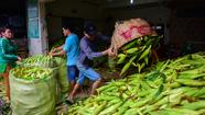Tấp nập kẻ mua người bán tại chợ bắp lớn nhất Sài Gòn