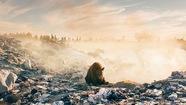 Nhói lòng cảnh gấu tuyệt vọng tìm thức ăn bên bãi rác
