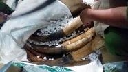 Điều tra xe chở 1,4 tấn hàng nghi ngà voi