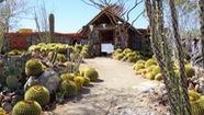 Ấn tượng nhà vườn xương rồng