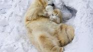 """Hạnh phúc gia đình chó, khỉ, gấu... cũng """"không gì sánh nổi"""""""