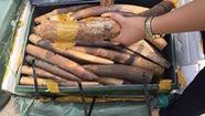 Bắt 300kg nghi là ngà voi tạisân bayNội Bài