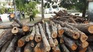 Cảnh cáo giám đốc hợp tác xã phá rừng ở Phú Yên