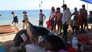 Cá voi 700kg chết dạt vô bờ biển miền Trung