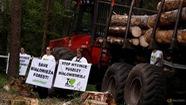 EU kiện Ba Lan ra tòa vì phá rừng