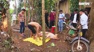 Bình Phước thông tin về ổ dịch sán dây lợn làm hơn 100 ca nhiễm bệnh