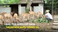 Chủ trại hươu chỉ cách thuần hóa hươu hoang dã