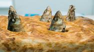 Chiếc bánh nướng đầu cá độc đáo