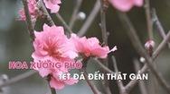 Hoa xuống phố, Hà Nội như Tết đã đến thật gần