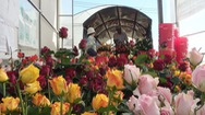 Để không còn cảnh bán đổ bán tháo hoa trong dịp Tết Kỷ Hợi 2019