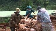 Lâm Đồng thiệt hại hơn 156 tỷ đồng do dịch tả heo châu Phi