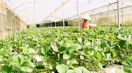 Lâm Đồng xuất khẩu 65% hoa và 49% rau sang Nhật