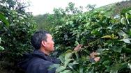 Lâm Đồng liên kết nông dân làm cà phê bền vững