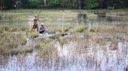Thu nhập cao với  nghề đẩy côn bắt cá lóc
