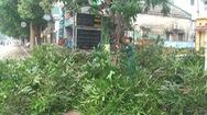 TP Vinh thay hơn 300 cây xanh làm phố đi bộ, người dân tiếc nuối