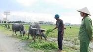 Trộm trâu bò hoành hành tại vùng bắc Quảng Bình