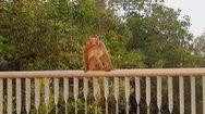Phút cảnh báo: Hiểm họa động vật hoang dã sổng chuồng