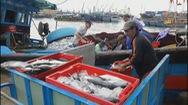 Hàng trăm tấn cá ồ ạt cập về bến sau bão số 6