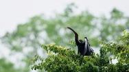 Phát hiện hàng trăm con chim cổ rắn quý hiếm tại Đồng Nai