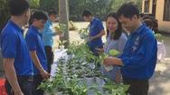Bạn trẻ công sở Nghệ An hào hứng đổi rác lấy cây xanh
