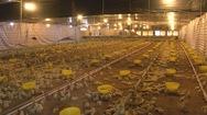 Kinh tế trang trại phát triển mạnh ở Lâm Đồng