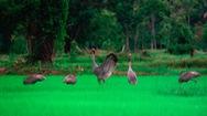 Vinpearl Safari Phú Quốc đăng cai  hội nghị bảo tồn và phúc trạng động vật lớn nhất Đông Nam Á