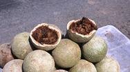 Hương vi kỳ lạ của trái quách