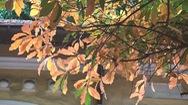 Hà Nội đẹp đến nao lòng trong mùa cây thay lá
