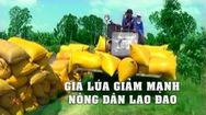 Tin nóng 24h: Nông dân miền Tây lao đao vì giá lúa giảm mạnh