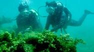 """Tin nóng 24h: Hai nữ kỹ sư """"trồng rừng"""" dưới đáy biển"""