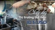 Dịch tả heo tấn công, chao đảo thị trường thịt heo Việt Nam 10 tỉ USD