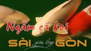 Tin nóng 24h: Chơi cá koi bạc tỉ ở Sài Gòn