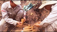 Phát hiện hầm chứa gần 100 quả đạn pháo dưới rẫy chuối