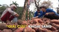 """Thanh niên Hà Nội """"giải cứu"""" khoai lang"""