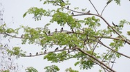 Hiểm họa từ việc giăng câu chim trời