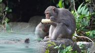 Kỳ thú xem rùa biển, khỉ về kiếm ăn quanh đảo Cù Lao Chàm