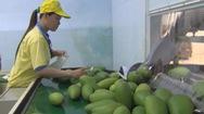 Tin nóng 24h: Sau 10 năm đàm phán, xoài Việt Nam được vào thị trường Mỹ