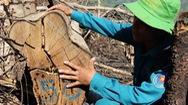 Tin nóng 24h: Tan hoang rừng phòng hộ đầu nguồn Ko Róa ở Khánh Hòa