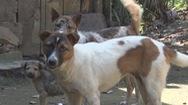 Tin nóng 24h: Báo động chó dại cắn người mùa nắng nóng