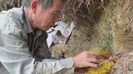 Bí quyết của cụ ông chuyên lấy mật ong rừng bằng tay không