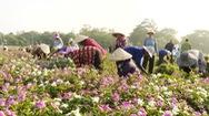 Góc nhìn trưa nay | Chuyện người dân hiến đất trồng dược liệu