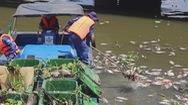 Bắt bớt cá trên kênh Nhiêu Lộc – Thị Nghè để cân bằng sinh thái