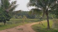 Giám đốc lâm trường chiếm đất rừng làm trang trại