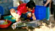"""Ngư dân câu được cá chẽm """"khủng"""" trên đầm Nha Phu"""