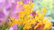 Góc nhìn trưa nay | Chiêm ngưỡng Festival hoa lan đặc sắc tại TP.HCM