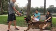 Tin nóng 24h: Buông lỏng quản lí, chó thả rông sẽ còn gây họa