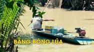 Độc đáo bắt cá mè vinh bằng bông lúa